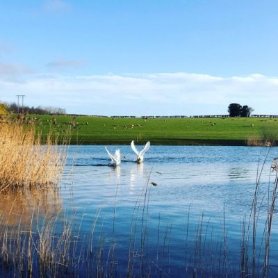 Local Area - Swanning Around